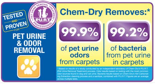 ChemDry | Pet Urine Carpet Cleaning | Carpet Cleaner TN